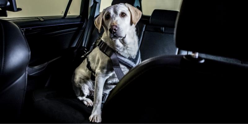 Cestování se psem v autě pohodlně a bezpečně
